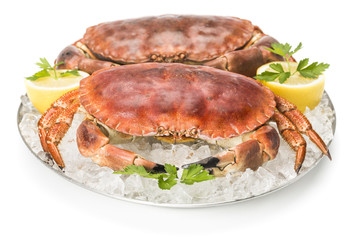 Two crabs on tray with ice
