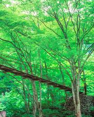新緑の中の吊り橋 埼玉