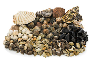Shellfish assortment