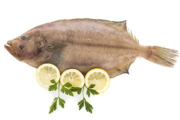 Flounder isolated on white