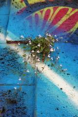 Petite plante fleurie sur un mur coloré de graffitis