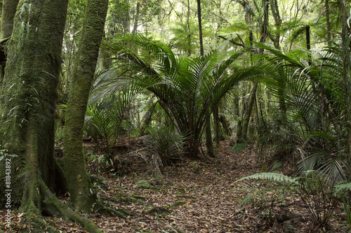 AluDibond Wald Jungle