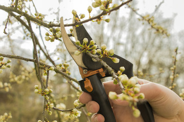 Spring gardening, pruning.