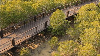 Mangrove tree garden on daylight