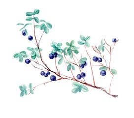 Bush bilberry. Forest miniatures. Watercolor