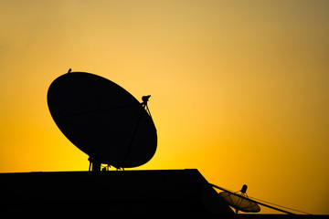 Morning backlight Satellite dishand little Bird