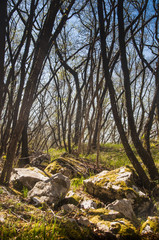Rocks in the woods