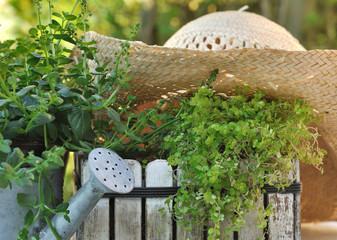 chapeau de paille sur plantes vertes