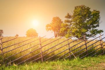 Rural nature at sunset