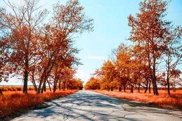 Fantastic autumn landscape with provincial road