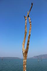 Dead trees in lake