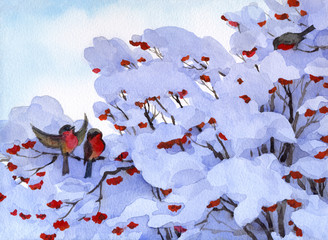 Watercolor winter scene. Bullfinch sitting on branches