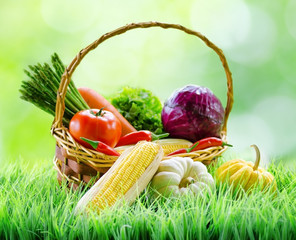 Fresh vegetables in the basket on green grass. Healthy eco food