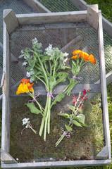 eatable flowers fresh from garden, The Netherlands