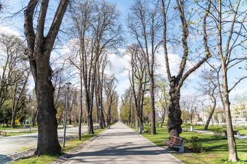 Spring In Central Park Of Cluj Napoca City, Romania