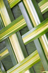 green palm tree leaf grid texture