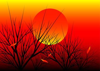 sunset nature background