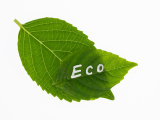 緑のエコマーク