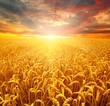 Leinwandbild Motiv Field of wheat