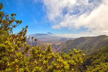 The Teide volcano behind trees in Tenerife, Spain