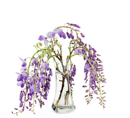 wisteria branches inside glass vase over white background