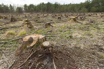 Cut down alder trees