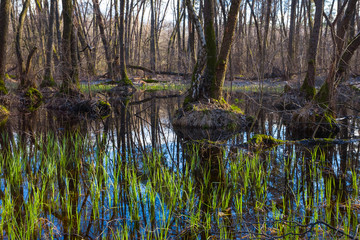 spring flooded forest scene