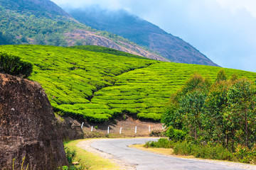 green tea plantations with road and clouds in the morning, Munna