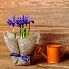 iris flowers in burlap and water can on wooden background, Insta
