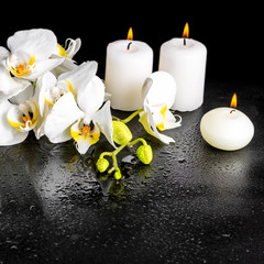 beautiful spa concept of blooming white orchid flower, phalaenop