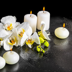 beautiful spa still life of blooming white orchid flower, phalae