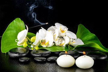 beautiful spa concept of blooming white orchid flower; phalaenop