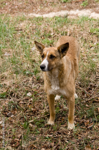 Stray dog pooch who lives in the Chernobyl exclusion zone poster
