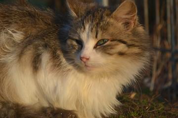 кошка взгляд