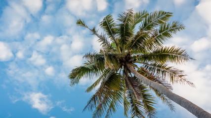 Coconut tree garden on daylight
