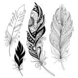 Fototapety Vector Peerless Decorative Feather