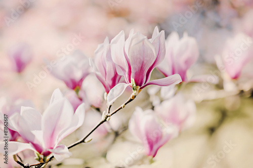 Staande foto Magnolia Magnolienblüten