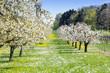 Leinwanddruck Bild - Frühling auf der Wiese