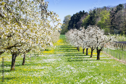 Plexiglas Weide, Moeras Frühling auf der Wiese