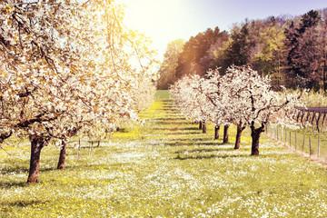 Frühlingserwachen Obstbäume