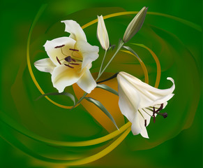 bunch of white lily blooms on green background