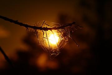 Örümcekağı-Doğu