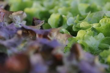 salat 04