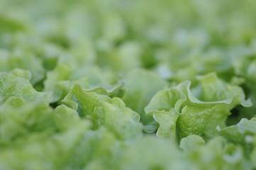 salat 08