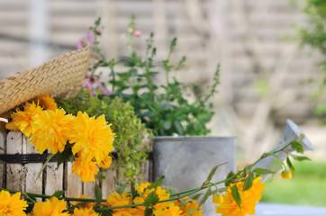 fleurs jaune parmi plantes vertes