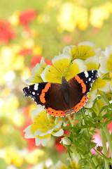 Schmetterling 140
