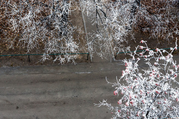 First hoarfrost on trees
