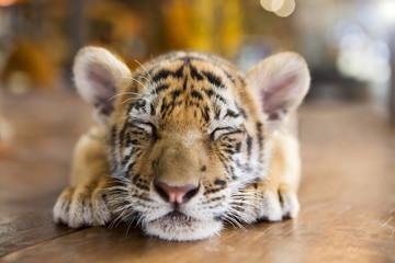 Cute tiger cub sleeping on a wooden floor