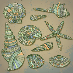 Vector set of decorative seashells