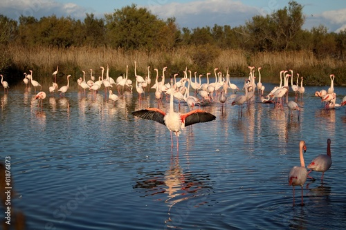 Foto op Aluminium Flamingo Flamants roses